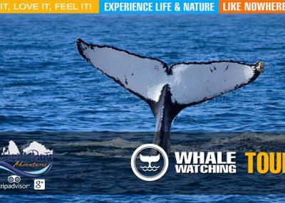 whale04