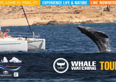 whale05