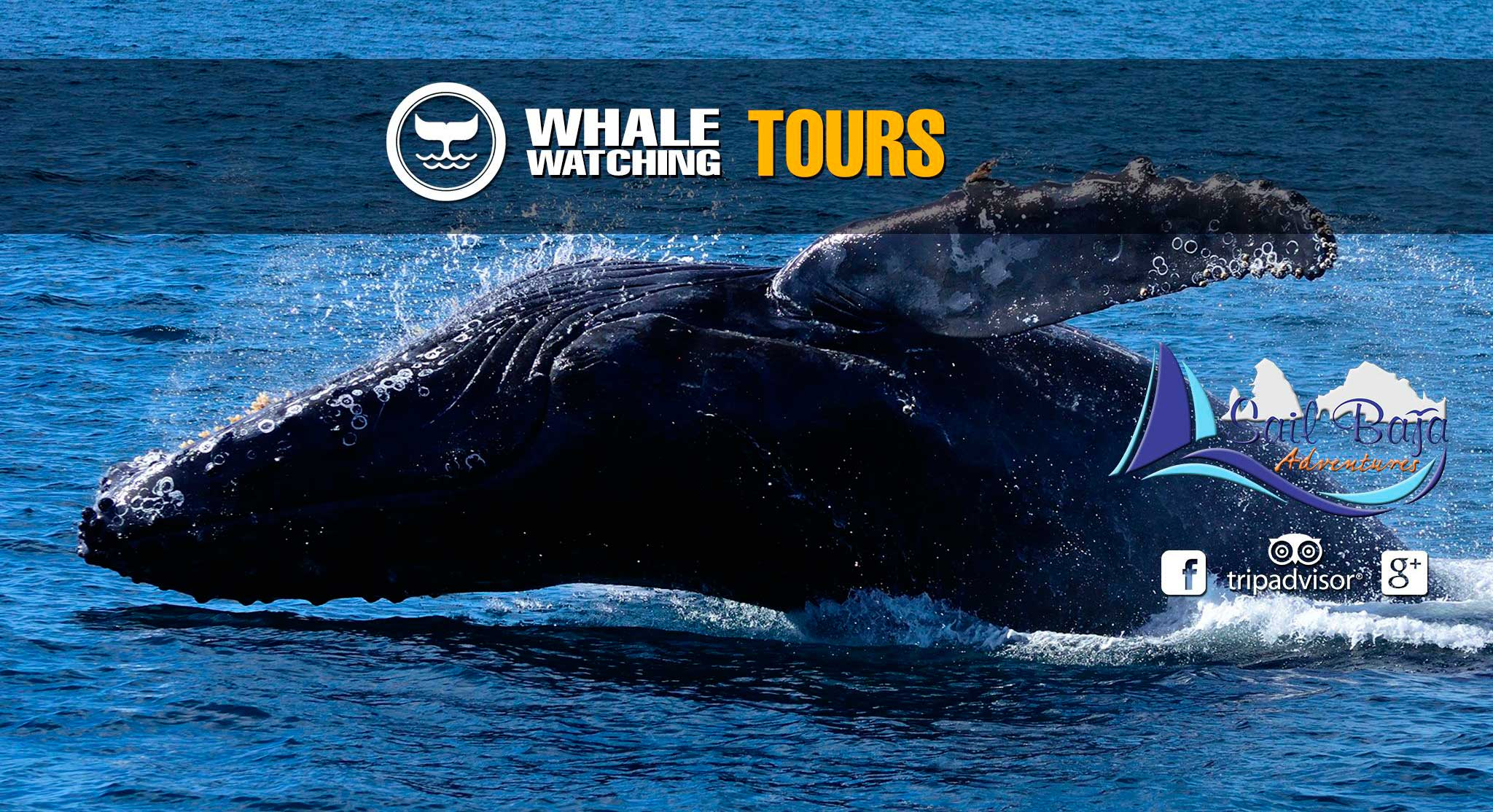Whale Watching Tours in Cabo San Lucas, Los Cabos, Mexico