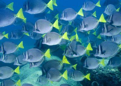 25-08-17-Cabo-Pulmo-Tropical-fish-1